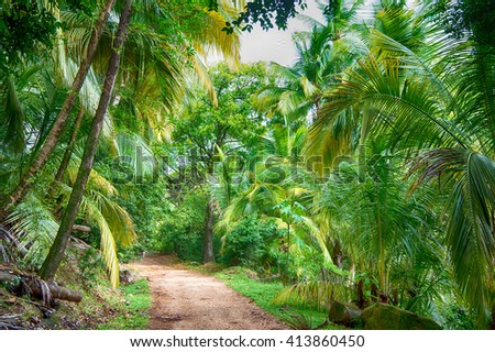 ground road in jungle of fresh bright green palm trees sunny day