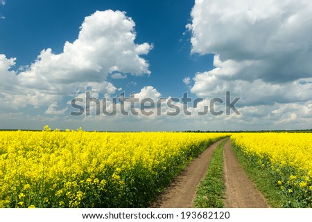 Ground road in rapeseed yellow flower field - stock photo