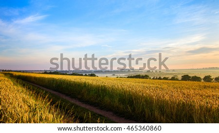 ground road in the rural field with golden wheat in the sunlight. wonderful landscape. use as background. original creative image