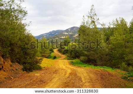 ground road through a forest