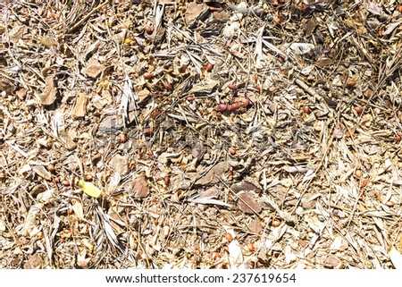 Ground texture in Seville park. - stock photo