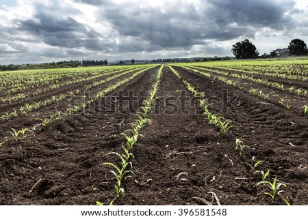 Ground with plants and beautiful cloudy sky - stock photo