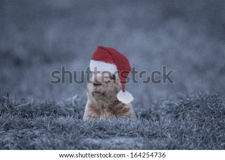 Groundhog with his Christmas Hat on in the Winter During a Snowstorm.