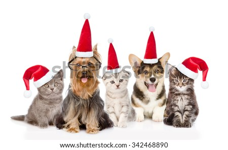Group cats and dogs in red santa hats looking at camera. isolated on white background - stock photo