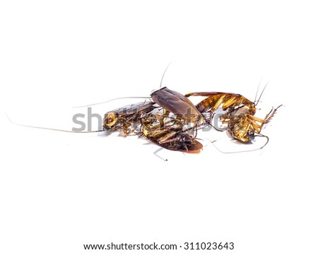 Group,dead cockroaches on white background
