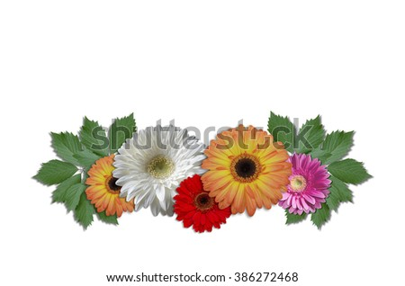 Group flowers daisies with green ivy leaves on a white background  - stock photo