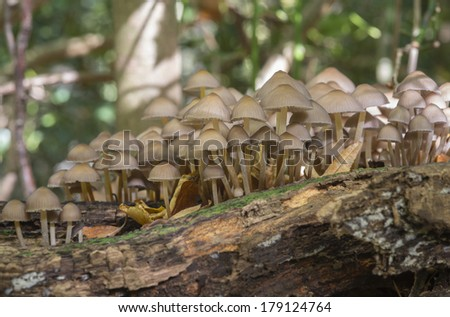 group fungus in autumn forest with leaves  - stock photo