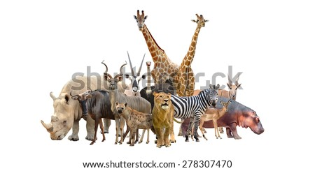 group of africa animals isolated on white background - stock photo