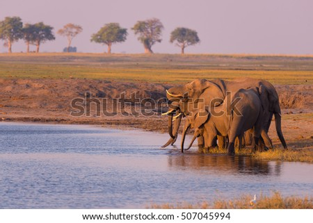 Chobe River Stock Images RoyaltyFree Images Vectors Shutterstock - Chobe river