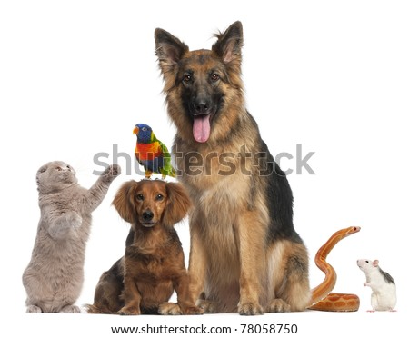 Group of animals in front of white background - stock photo