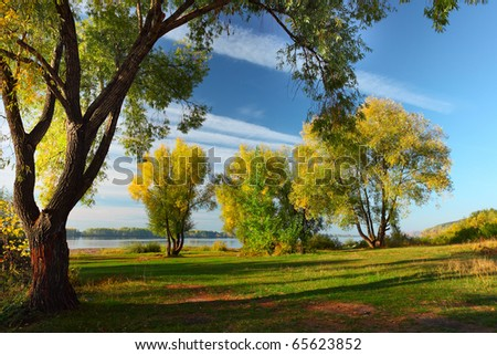 Group of autumn big trees on a lawn - stock photo