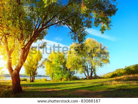 Group of autumn trees standing on a meadow by river - stock photo