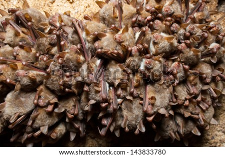 Group of bats in the underground cave - stock photo