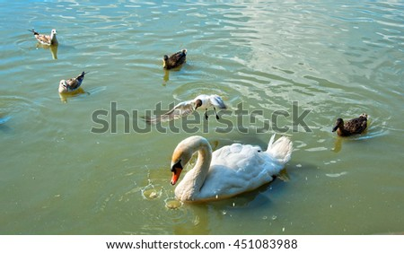 Group of beautiful birds swimming on a lake. Floating swan, sea gulls, mallard ducks on water background. Flying gull. Amazing image of European wildlife. Migratory birds. Waterfowl. Nice landscape - stock photo