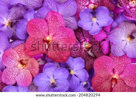 group of beautiful blooming orchid - stock photo