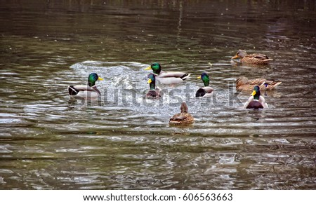 Waterfowl Stock Images, Royalty-Free Images & Vectors ...