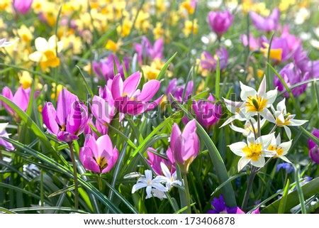Group of beautiful flowers in the park. Spring landscape.