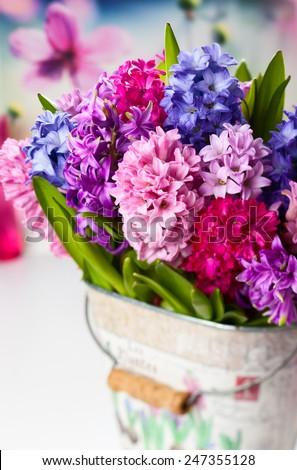 Group of beautiful multicolored hyacinths - stock photo