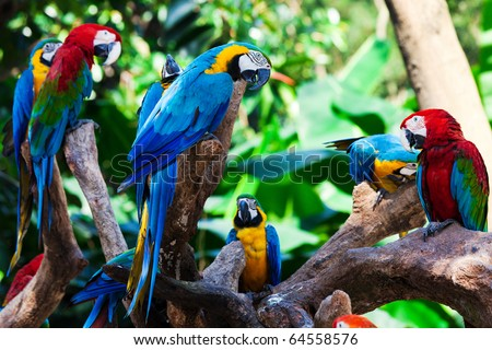 group of beautiful parrots in a tree - stock photo