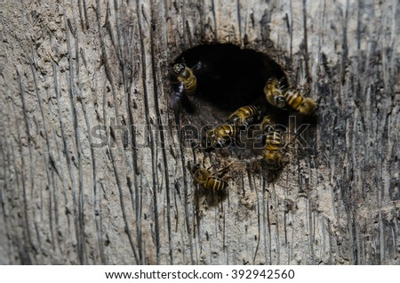 Group of bees near a beehive, in flight - stock photo