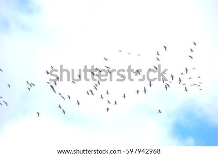 Group of bird fly in cloud sky background
