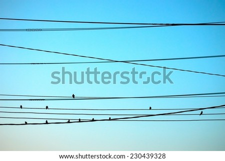 Group of bird on wires - stock photo