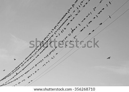 Group of Birds sitting on wires on against the sky like notes black and white image