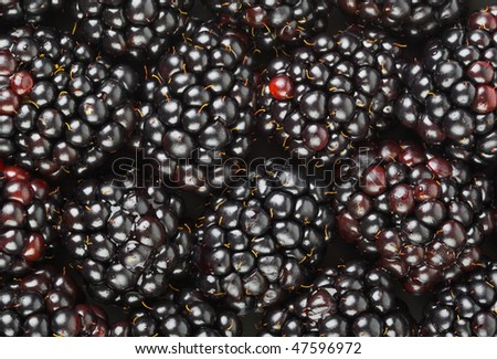 Group of blackberry - abstract food background