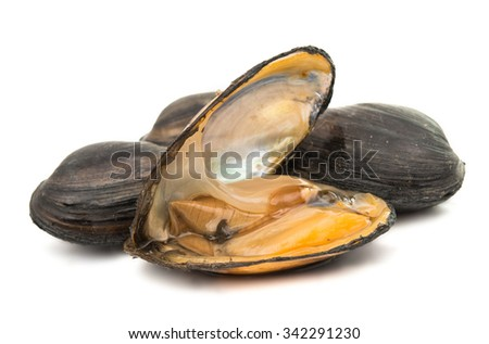 group of boiled mussels in shells isolated on white background - stock photo