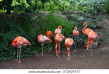 Group of bright pink flamingos standing by each other in Emmen zoo, Netherlands