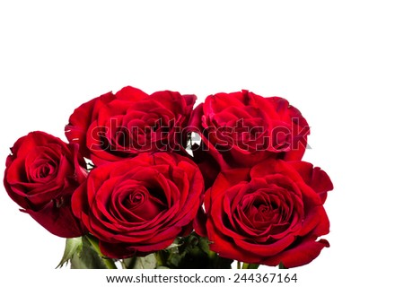 Group of bright red roses isolated on white - stock photo