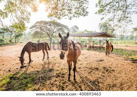 Group of brown horse in a farm and golden light