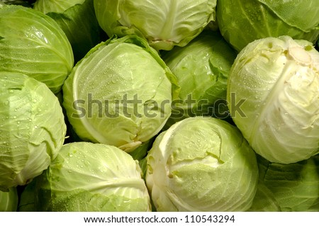 Group of Cabbages - stock photo