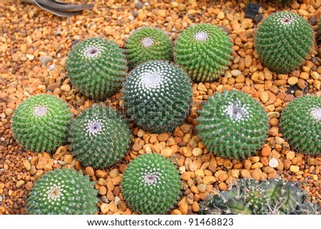 Group of Cactus - stock photo