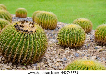 Group of cactus in the garden