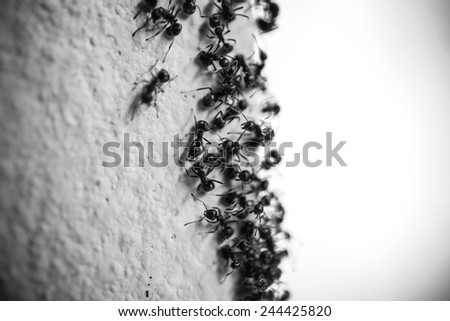 Group of carpenter ants on the wall - stock photo