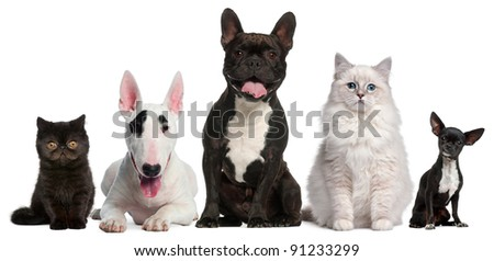 Group of cats and dogs sitting in front of white background - stock photo