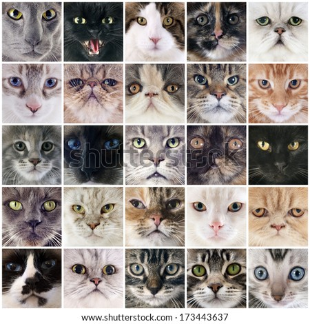 group of cats in a composite picture
