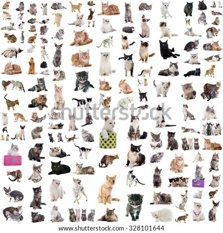 group of cats in front of white background - stock photo