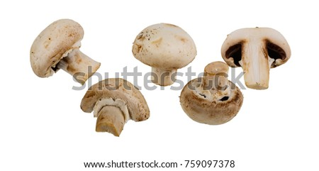 group of champignon mushrooms isolated on white background