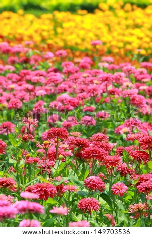 group of colorful flower in garden