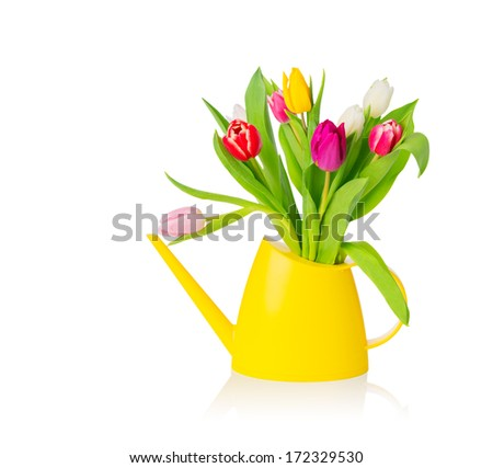 Group of colorful tulips in yellow water pot over white background, isolated, with copy space. Easter greeting card.