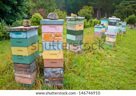 Group of Colorful Wooden Beehives in Countryside with Bees Swarming around - stock photo