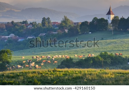 Group of cows on morning pasture over village with church on the top of the hill. Landscape is covered by morning mist. - stock photo