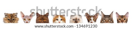 group of cropped view of Cat heads isolated on white