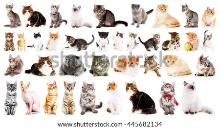Group of cute cats, isolated on white - stock photo