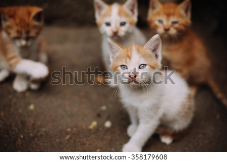 Group of cute homeless kittens looking at camera - stock photo