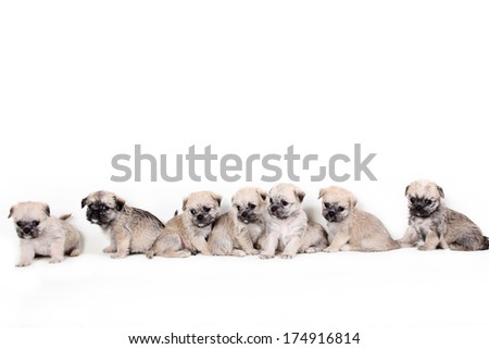 Group of cute puppies on white background - stock photo