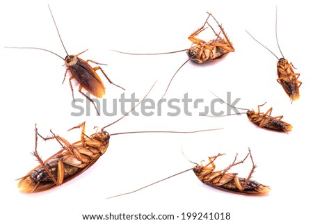 Group of dead cockroach isolated on a white background. - stock photo