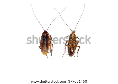 Group of  Dead cockroach on white background